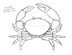 How to draw a crab step by step 4