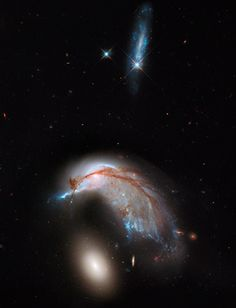 The Porpoise Galaxy - Interacting galaxy duo, Arp 142, shows the orbits of the galaxy's stars have become scrambled due to gravitational tidal interactions with the other galaxy.