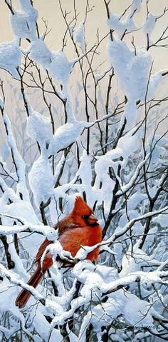 Art Country Canada - John Seerey-Lester - The World's largest online collection of Limited Edtion paper and Giclee on Canvas Pretty Birds, Love Birds, Beautiful Birds, Animals Beautiful, Winter Pictures, Bird Pictures, Snow Scenes, Winter Scenes, Hirsch Illustration
