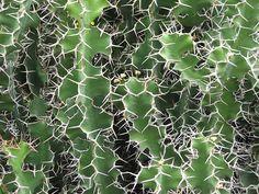 cactus fractal.jpg