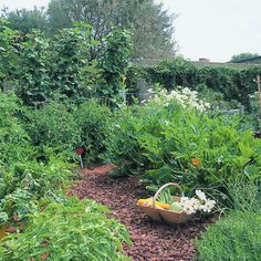 """keyhole"" vegetable garden. possibly w/ pebble path leading to small seating, veggies along sides"