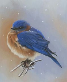 Bluebird Digital Art - Bluebird In The Snow by Lena Auxier Painting Snow, Winter Painting, Winter Art, Hand Painting Art, Painting & Drawing, Snow Artist, Amazing Paintings, Yellow Background, Bird Art