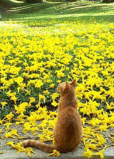 inner peace - vielleicht dort drüben... Dir auch einen schönen Freitag! :o)