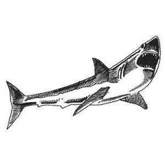 Free Cartoon Shark Clipart Shark Outline And Shark