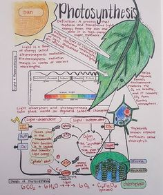 Ideas For Science Notes College Ap Biology Ap Biology, Biology Revision, Science Revision, Gcse Science, Study Biology, Biology Lessons, Science Notes, Science Biology, Teaching Biology