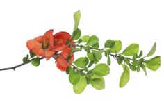 Growing a pomegranate tree from cuttings is costfree and relatively easy. Find more information about how to root a pomegranate tree from pomegranate tree cuttings in the article that follows. Click here to learn about pomegranate propagation.