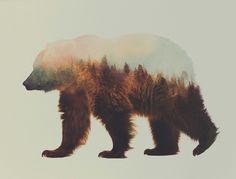Incredible Double Exposure Animal Portraits by Andreas Lie.