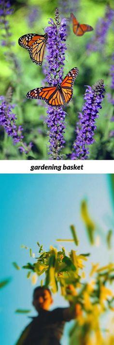 gardening organisation #gardening australia calendar 2018, america\'s ...