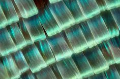 Macro Photographs of Butterfly And Moth Wings by Linden Gledhill | DeMilked