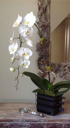 The Knightsbridge Orchid Phalaenopsis arrangement. House of Orchids London #orchids #phalaenopsis #lorchidee