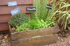 Figurines, objets du quotidien ou créations originales... Las des pots et jardinières classiques, particuliers, professionnels du jardin ou designers ont rivalisé d'imagination pour offrir aux plantes le plus original des écrins.