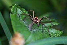 Spinnentier, Insekt, Spinne, Nahaufnahme, Arachne