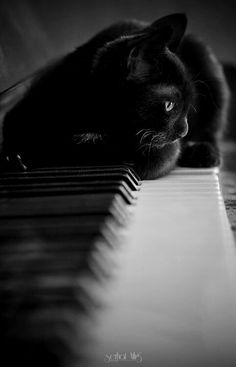 Cats always dance to their own tune.