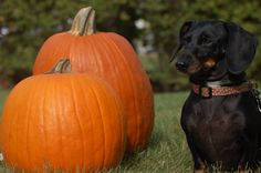 Fall photos for dogs!