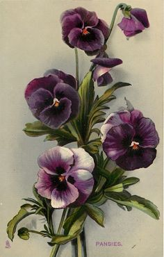 Happy Friday!  Thank you for your pins today.  Tonight and Saturday, let's do PANSIES.