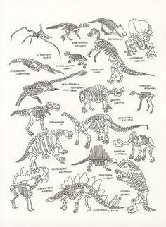 Dinosaurs at The American Museum of Natural History by Jason Polan ARTIST Dinosaurs Preschool, Dinosaur Activities, Dinosaur Crafts, Dinosaur Fossils, Dinosaur Art, Dinosaur Skeleton, Irezumi, Historia Natural, Prehistoric Creatures
