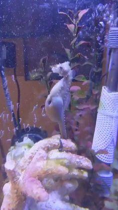 Cute Wild Animals, Cute Little Animals, Happy Animals, Nature Animals, Cute Funny Animals, Animals And Pets, Beautiful Sea Creatures, Animals Beautiful, Cute Animal Videos