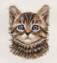 TABBY CAT, KITTEN, Detailed Face ~ Full counted cross stitch kit for you to sew  | eBay