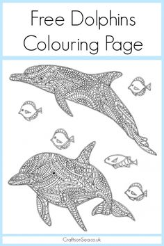 Free Dolphin Colouring Page For Adults