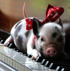Brilliant... Pig In Spanish Google Translate #superb