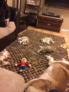 I am not a dog person but these husky puppies are toooooooo cute! Cute Funny Animals, Funny Cute, Funny Dogs, Hilarious, Funny Humor, Funny Stuff, Cute Puppies, Cute Dogs, Dogs And Puppies