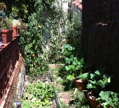 Este es el #huerto urbano de Mónica, que ha hecho ella misma aprovechando un rinconcito de su #patio. No está mal, verdad? www.ecobrotes.es