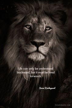 79 Inspirational Quotes That Will Change You (Forever) Daily Inspiration Quotes, Daily Quotes, True Quotes, Wisdom Quotes, Uplifting Quotes, Inspirational Quotes, Motivational Lines, Lion Quotes, Biker Quotes