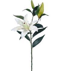 Tiger Lily Spray in Cream | Afloral.com - Satisfaction Guarantee $5.99