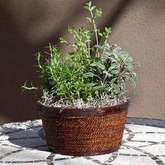 Herb Garden in Round Wood and Wicker Container
