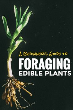 cool Beginners Guide to Foraging Edible Plants