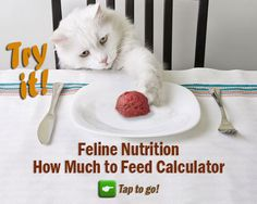 Feline Nutrition's Easy Homemade Cat Food Recipe Homemade raw food gives you control over what's in your cat's food. It is very economical. It takes a little time and equipment, but it's worth it! Kitten Treats, Kitten Food, Kitten Care, Homemade Cat Food, Cat Nutrition, Nutrition Guide, Cat Diet, Cat Health, Health Care