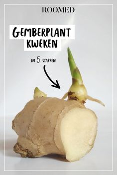 It is possible to grow your own ginger plant - and we know how, Ginger Plant, Growing Greens, Edible Garden, Growing Vegetables, Trees To Plant, Vegetable Garden, Gardening Tips, Planting Flowers, Food And Drink