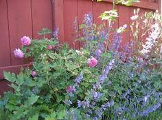rosor o lavendel