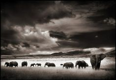 Africa, segundo o olhar de Nick Brandt http://obviousmag.org/archives/2008/11/africa_segundo_o_olhar_de_nick_brandt.html?utm_source=obvious_medium=cpc_campaign=related_articles_bottom