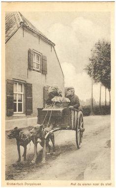 18280 Het vervoeren van eieren met de hondenkar... | Zoek resultaat | RHCe - Regionaal Historisch Centrum Eindhoven
