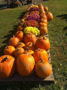 Pumpkin Farm | Flickr - Photo Sharing!