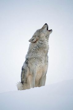 Reminds me of my grandma....my dads mom..she likes wolves :)