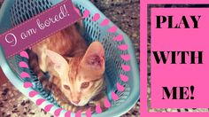 """Cats Can Play Fetch Too - Pixie Fetches Teddy!  It is not just dogs, but cats can play """"Fetch"""" too!! Pixie absolutely loves to play! Enjoy this little video where Pixie fetches the teddy for me."""
