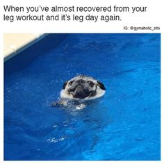 Check out latest list of funny memes photos of the day to make you lol. These are the funniest memes that makes everyone laughing and entertaining. Funny Cute, The Funny, Daily Funny, American Fitness, Animal Memes, Funny Animals, Adorable Animals, Pug Meme, Funny Memes