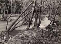 Arnsberger Wald, Uroetal by Albert Renger-Patzsch 1960