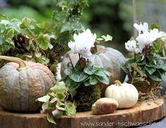 Alpenveilchen Dekoration Herbst