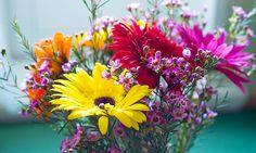 Flores Gérbera em casa.