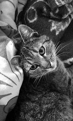 Meow#love