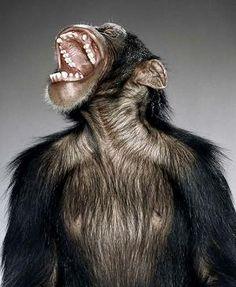 monos - Buscar con Google