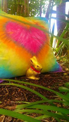 Love that wabbit! Parrot, Fish, Pets, Animals, Animais, Parrot Bird, Animales, Animaux, Parrots