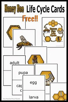 {FREE} Honey Bee Life Cycle Cards! | Preschool Powol Packets