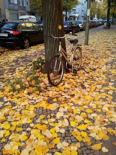 18 coisas na Alemanha que são 'estranhas' para os brasileiros   | outono alemão