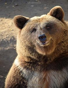 Grizzly Bear Kingdom has current information, petitions, photographs about these magnificent Grizzly Bears. Striving to protect Grizzly. Photo Ours, Photo Animaliere, Bear Pictures, Animal Pictures, Beautiful Creatures, Animals Beautiful, Regard Animal, Funny Animals, Cute Animals