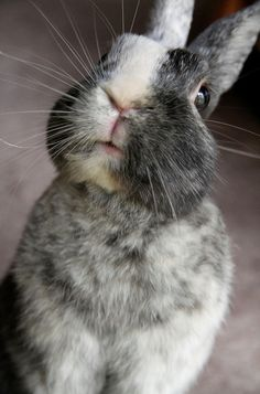 Bunny whiskers