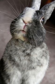 Did you say something? #animals #bunny #rabbits #pets
